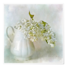 Poster  White Lilac - Lizzy Pe