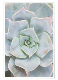 Poster  Pale green succulent plant