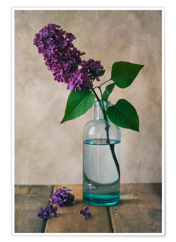 Poster Still life with fresh lilac flower