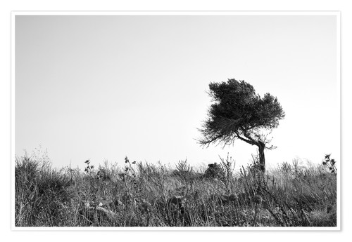 Poster Olive tree monochrome