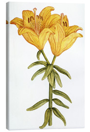 Tableau sur toile  Yellow Lily - French School