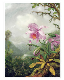 Poster  Hummingbird Perched on an Orchid Plant - Martin Johnson Heade