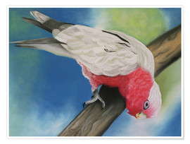 Poster pink cockatoo