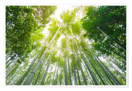 Poster  Light falls through the bamboo forest