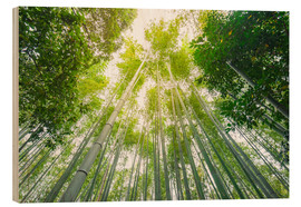 Bois  Light falls through the bamboo forest