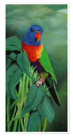 Poster colorful Rainbow lorikeet