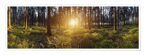 Poster Sunlight in deep forest