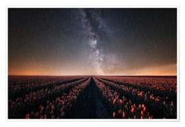 Poster Tulip field and Milky Way