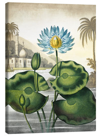 Tableau sur toile  The blue Egyptian water-lily - Robert John Thornton