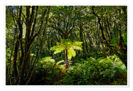 Poster  Tree fern in the rainforest New Zealand - Michael Rucker