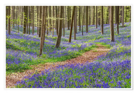 Poster Path through the blue forest