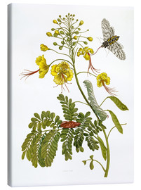 Toile  A moth and a caterpillar - Maria Sibylla Merian