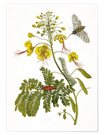 Poster  A moth and a caterpillar - Maria Sibylla Merian