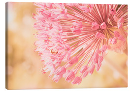 Tableau sur toile  Creamy Summer - Allium in Pink - INA FineArt