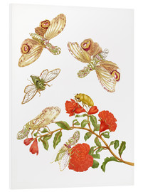 Tableau en PVC  Pomegranate with Lantern Fly and Cicada - Maria Sibylla Merian