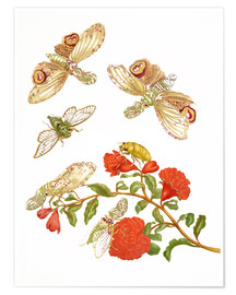 Poster  Pomegranate with Lantern Fly and Cicada - Maria Sibylla Merian