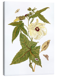 Toile  musk plant with lepidoptera metamorphosis - Maria Sibylla Merian