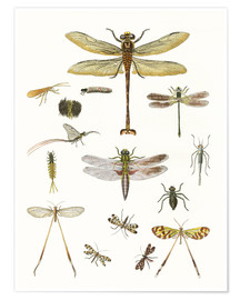 Poster  Insectes étranges - German School