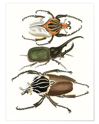 Poster Large and rare beetles