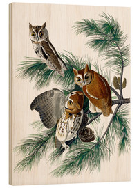 Bois  Three birds - John James Audubon