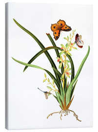 Tableau sur toile  Butterflies and a dragonfly on a plant