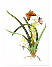 Poster  Butterflies and a dragonfly on a plant