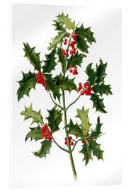 Verre acrylique  European holly