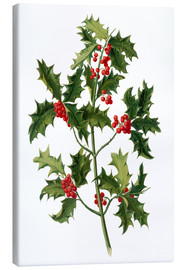Toile  European holly