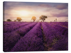 Toile  Lavender field at sunset, Provence - Elena Schweitzer