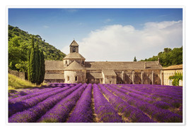 Poster Senanque Abbey with lavender fields