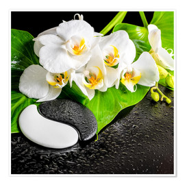 Poster  Spa arrangement with white orchid