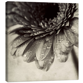 Toile  Close up abstract of gerbera flower