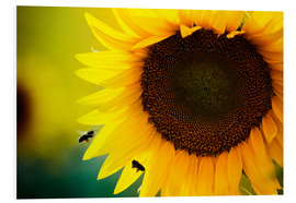 Forex  Two bees in sunflower
