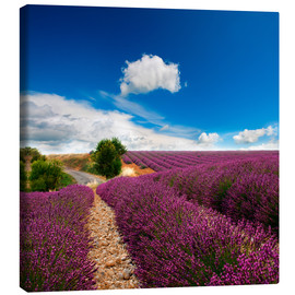 Toile  Beautiful lavender field
