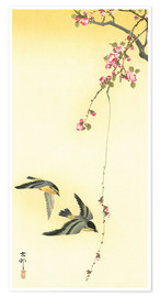 Poster  Starlings and Cherry Tree - Ohara Koson