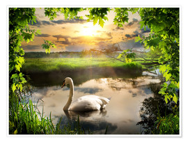 Poster  Romantic swan pond