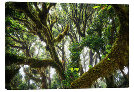 Tableau sur toile  Old virgin forest, laurel, Madeira - Dennis Fischer