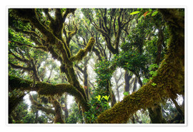 Poster  Old virgin forest, laurel, Madeira - Dennis Fischer