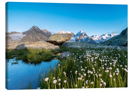 Toile  Blooming of cotton grass at feet of Piz Bernina, Switzerland - Roberto Sysa Moiola