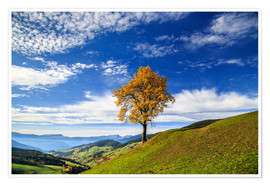Poster Isolated tree in autumn, Funes Valley, South Tyrol, Italy