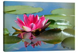 Tableau sur toile  Water lily with reflection - GUGIGEI