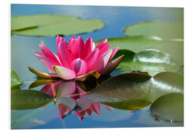 Tableau en PVC  Water lily with reflection - GUGIGEI