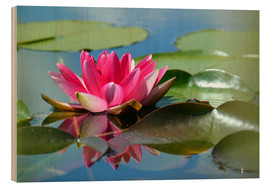 Tableau en bois  Water lily with reflection - GUGIGEI