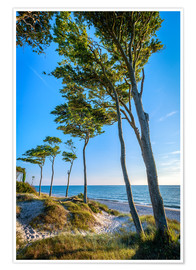 Poster Baltic Sea Beach with Trees
