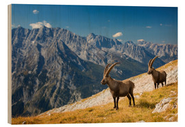 Bois  Two Alpine Ibex in front of Mount Watzmann - Dieter Meyrl