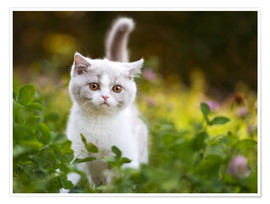 Poster Kitten on a green meadow