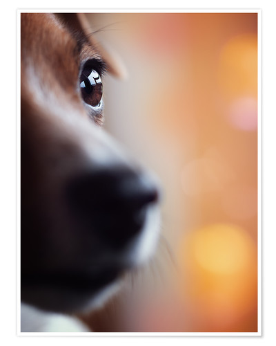 Poster PERSPECTIVE - Jack Russel eye