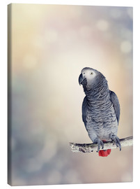 Tableau sur toile  African Grey on a branch