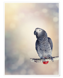 Poster  African Grey on a branch