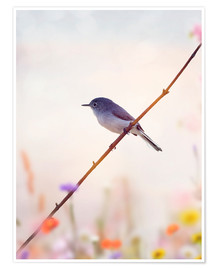 Poster Blue-gray Gnatcatcher